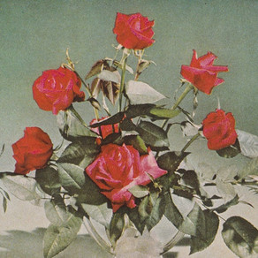White Poppy - Drifters Gold