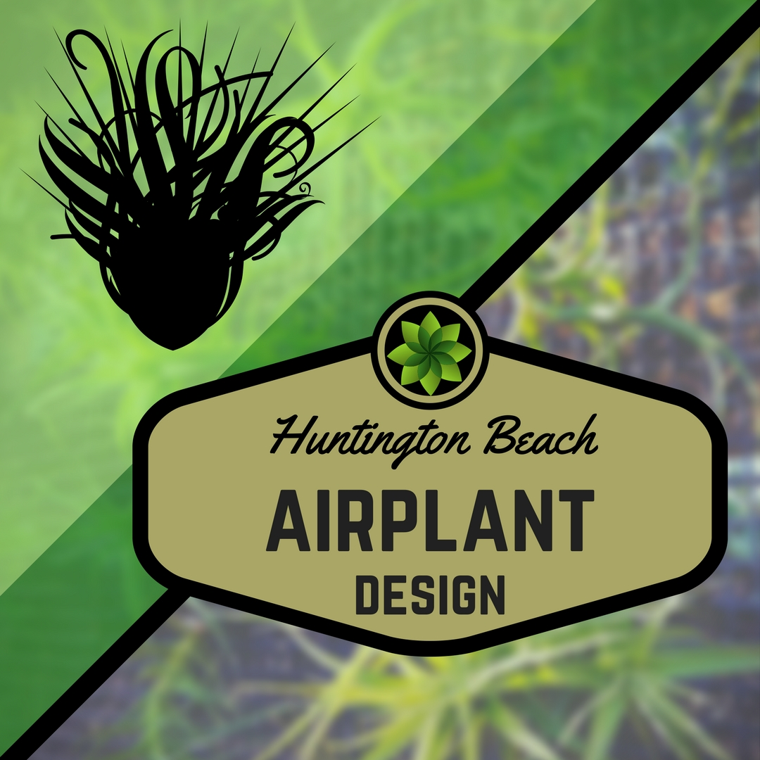 AirplantSticker