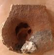 Patte de chat sur une tuile gallo-romaine