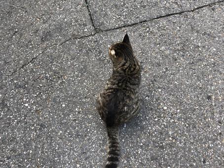 고양이가 함께 하기엔 아직도 어려운 사회