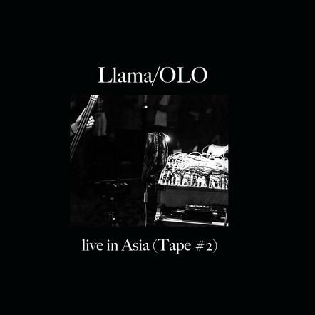 Llama/OLO - Live in Asia