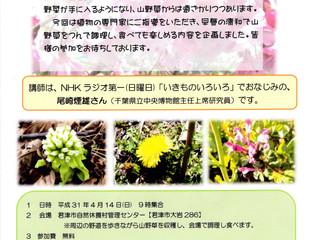 1「体験せいわ学」山野草をつんで食べよう4月14日(日)