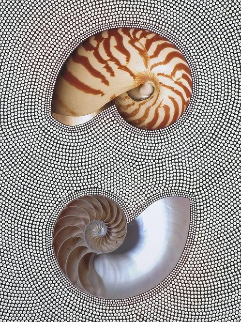 Fossili contemporanei