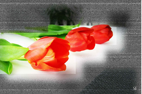 Tulips tracks