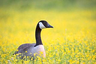 Wild Goose RV Park photo.jpg