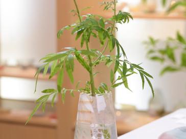 【吉村桂子 ガラス展-大地の風- 】ツギハギ花器