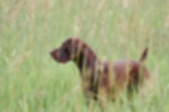 Dogs2-2.jpg