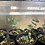 Thumbnail: Plants