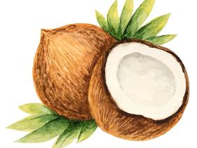 De wonderbaarlijke kracht van kokosolie!