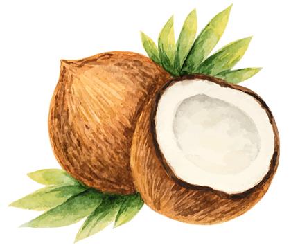 Kokosolie gezonder dan ooit