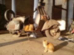 Kittens in Varanasi