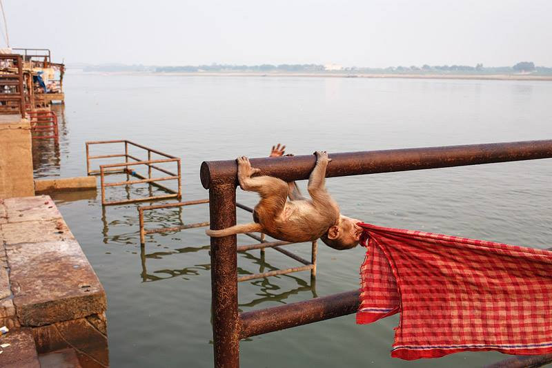 Monkey Baby by the Ganges