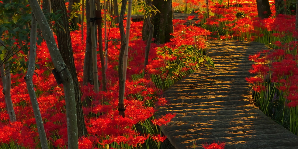 Workshop | Autumnal Equinox Sound Meditation @ Temple Vol.3