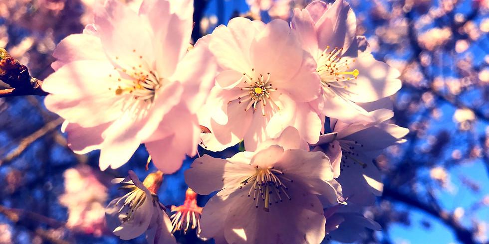 Workshop Middle Spring - Sakura Sound Meditation @ Temple Vol.6