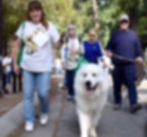dog walk_edited_edited.jpg