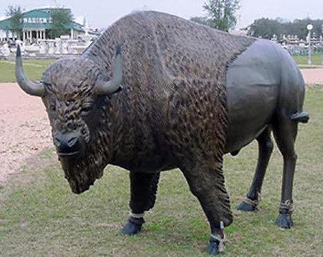 Large Buffalo