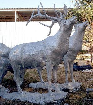 Mountain Elk on Base