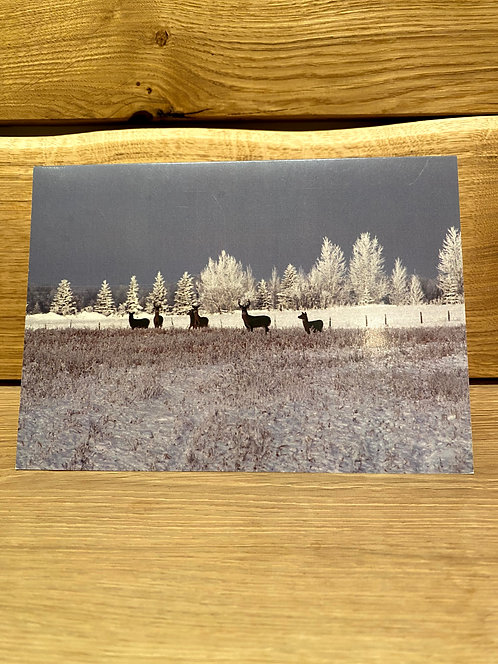 Carys Bonser Cards