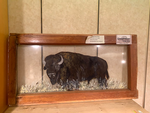 Vintage Window Painting Manitoba Bison/Buffalo