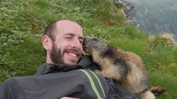 Marmotte Attaque