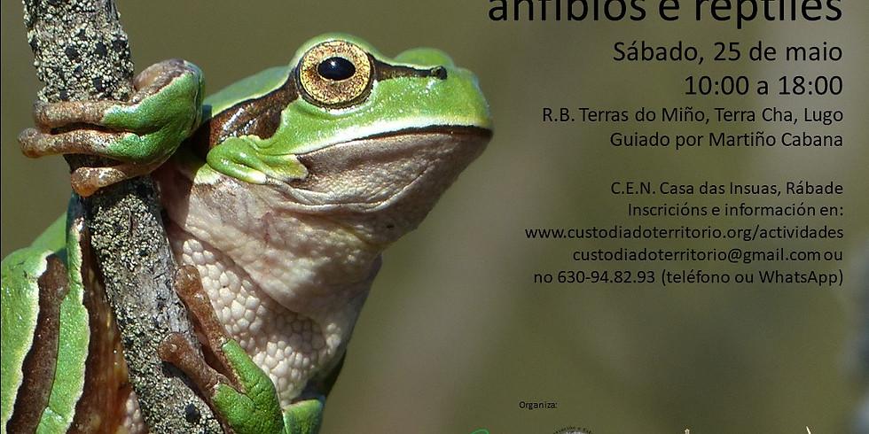 Xornada de observación de anfibios e réptiles