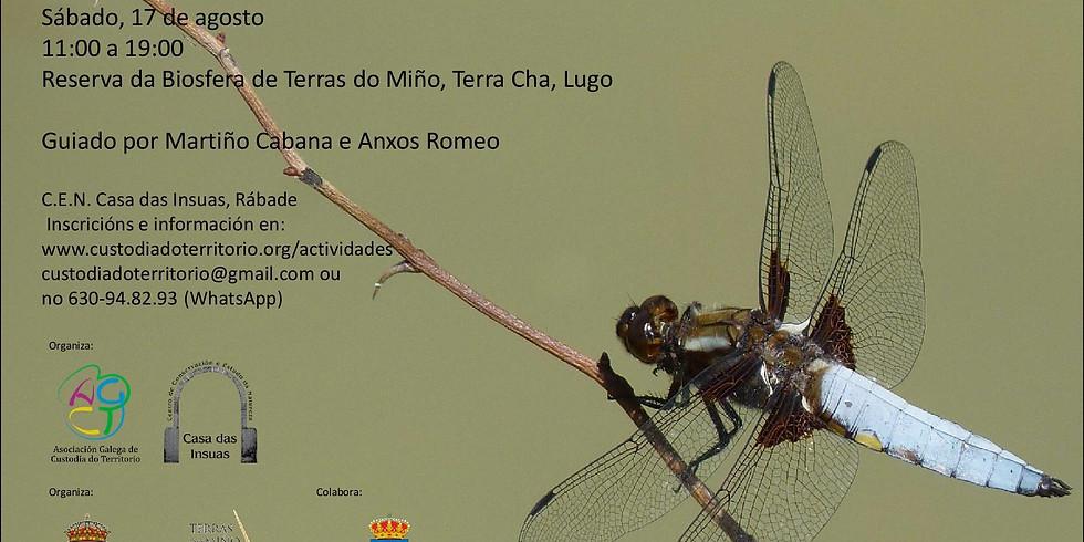 Xornada de observación de libélulas