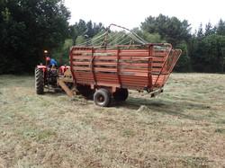 Recollida de herba nun prado donante