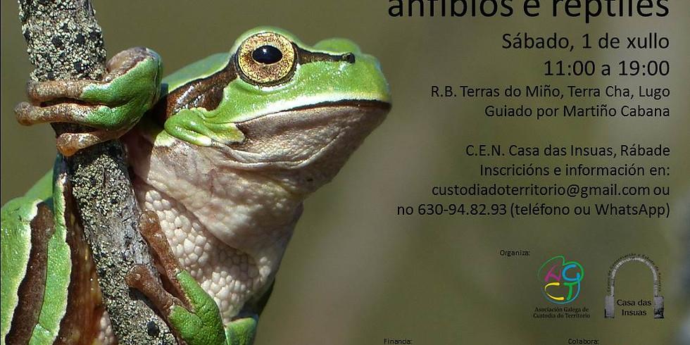 Saída ó campo para a observación de Anfibios e réptiles