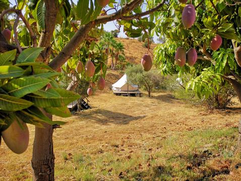 Votre nid entre les manguiers à Pura Natura