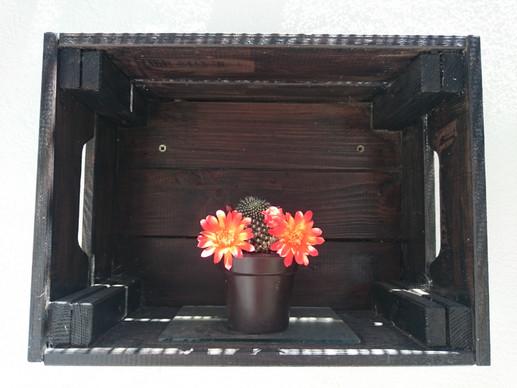 Joyeux cactus à Pura Natura