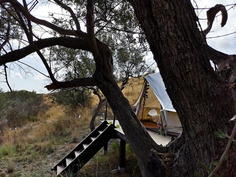 Entre les arbres à Pura Natura