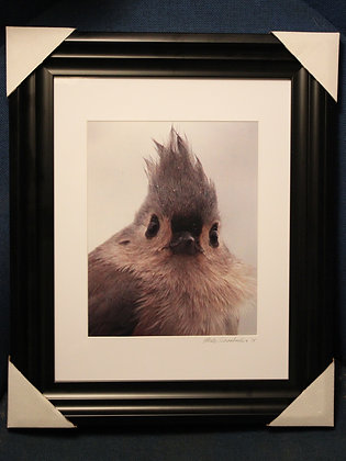 "8X10"" Tufted Titmouse Print - Matted and Framed"