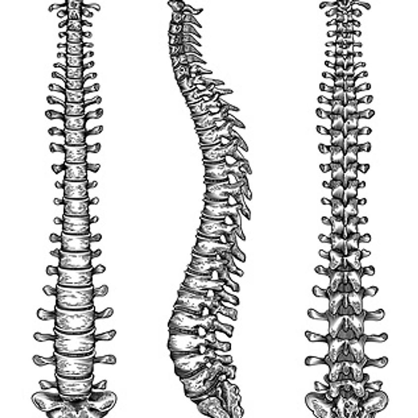 """Anatomie Workshop """"BACK""""GROUND"""