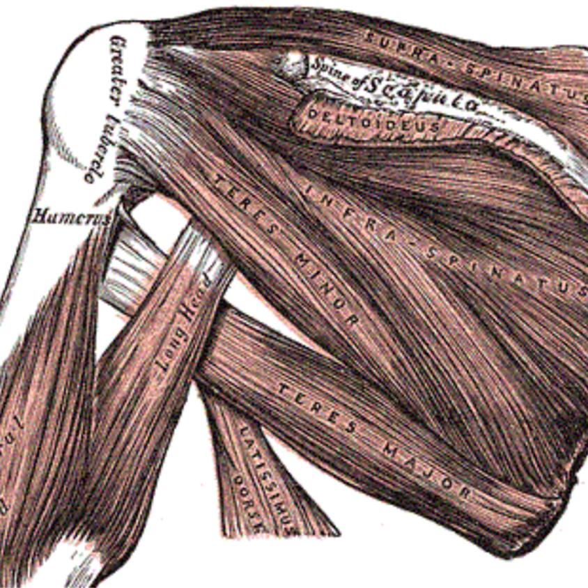 """Anatomie Workshop """"SHOULDER"""" Ground"""
