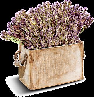 lamarriterranea-inicio-flores.png