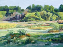 Forest River Summer