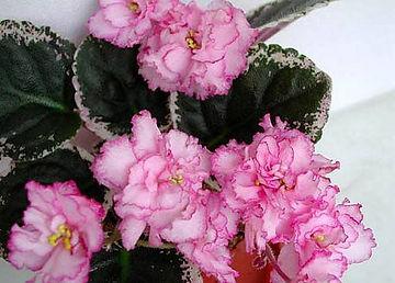 Услуги по уходу за комнатными растениями и цветами