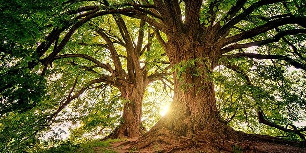 De boom: aarden en in je kracht staan
