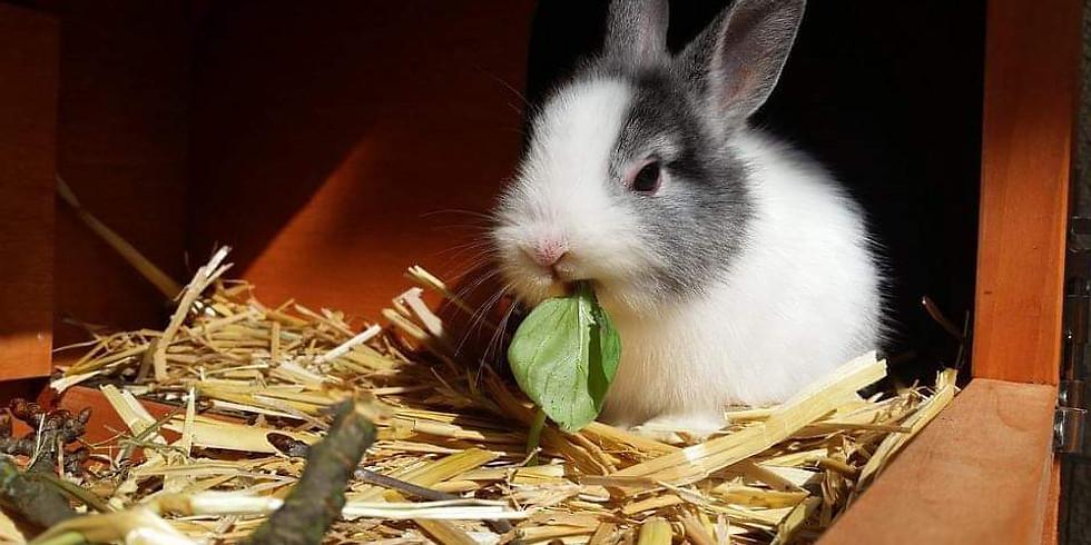Kinderworkshop: koken voor konijnen