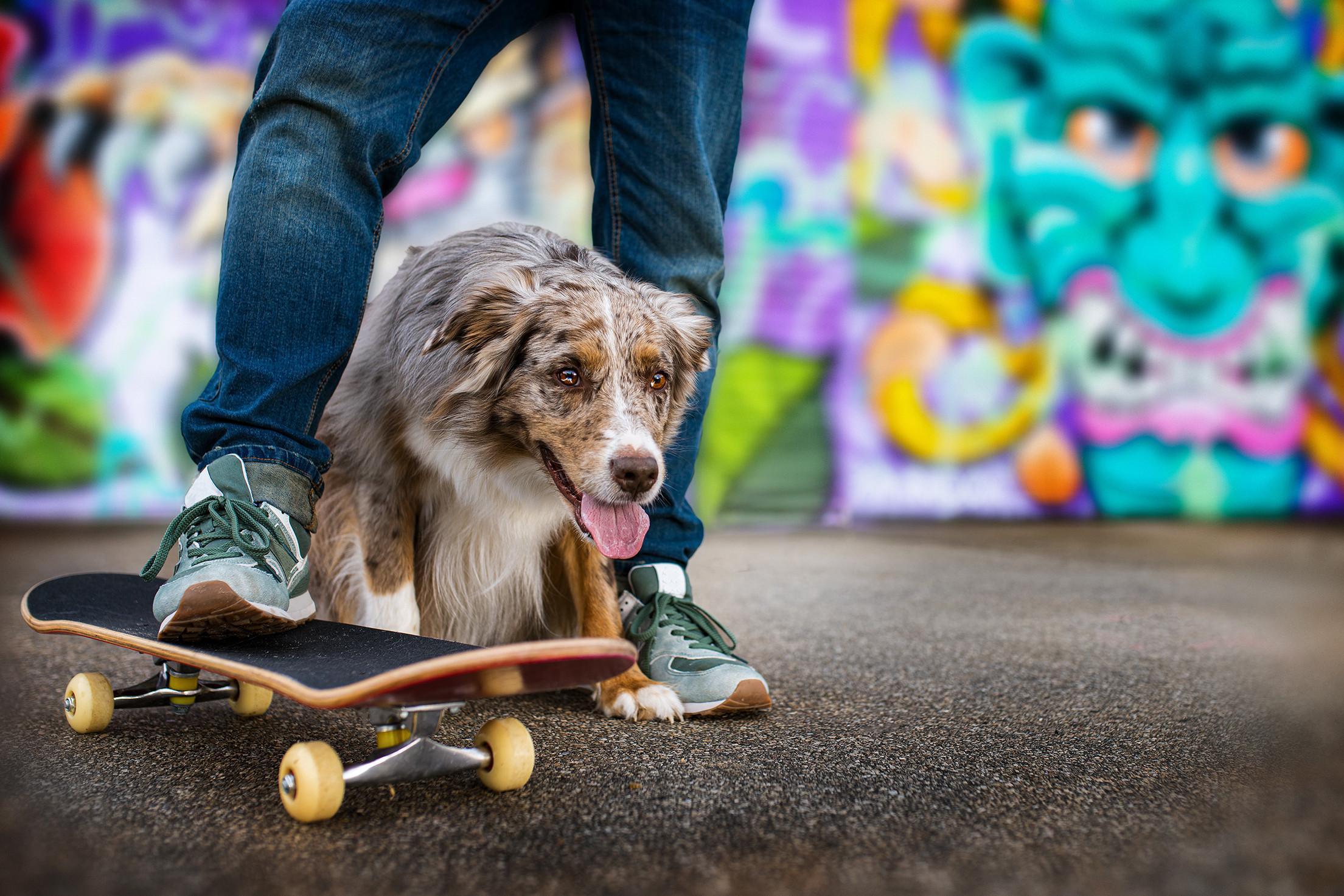 Outdoor Hund - Location nach Wunsch