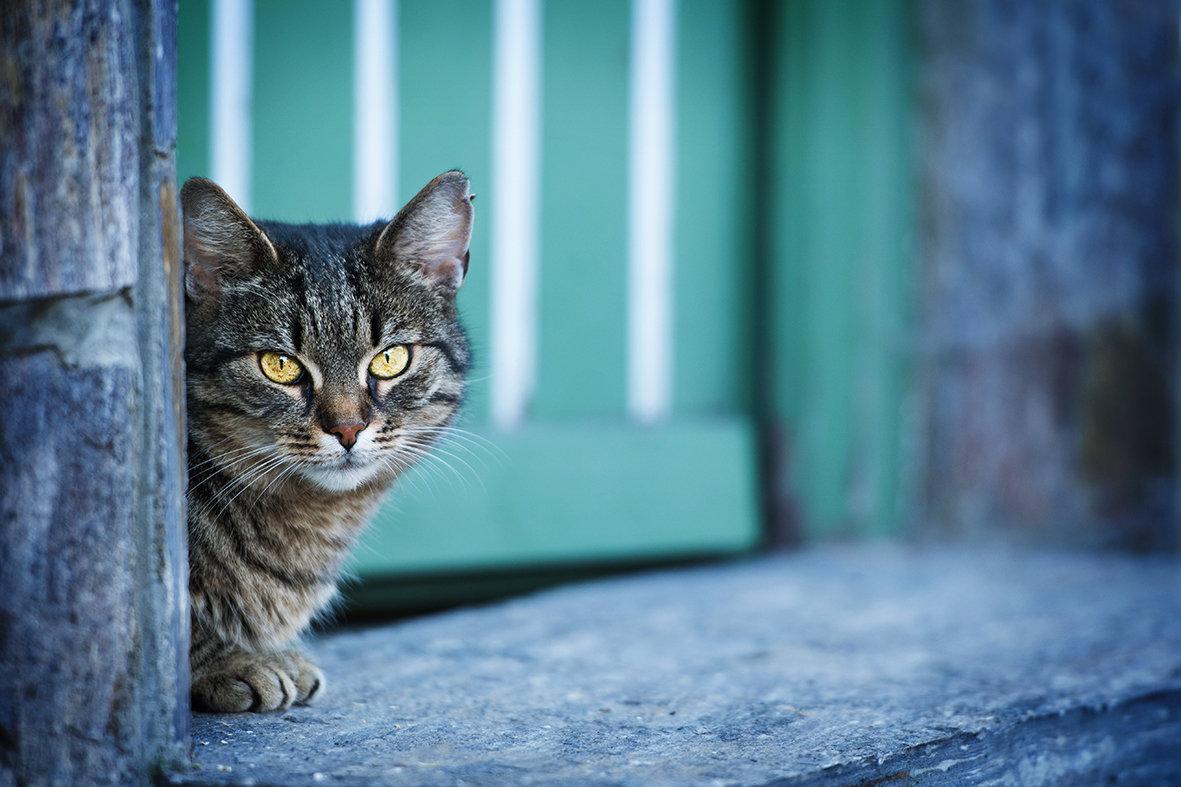 OUTDOOR Katzenshooting bei Dir Zuhause