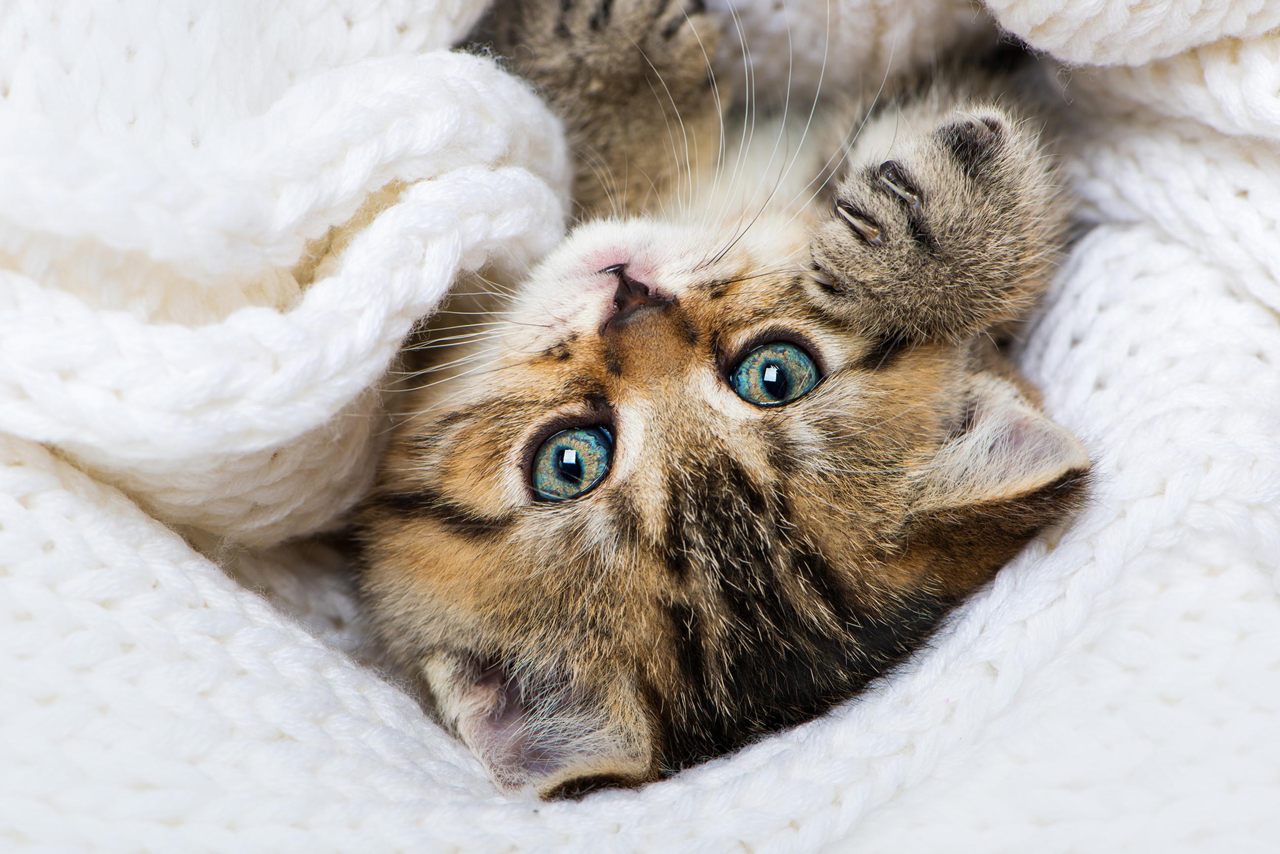 INDOOR Katzenshooting bei Dir Zuhause