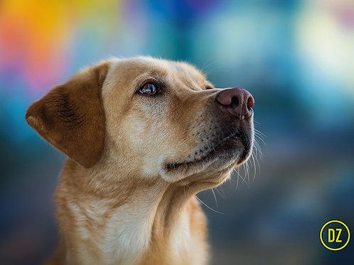 """10 Postkarten """"Labrador Retriever"""""""