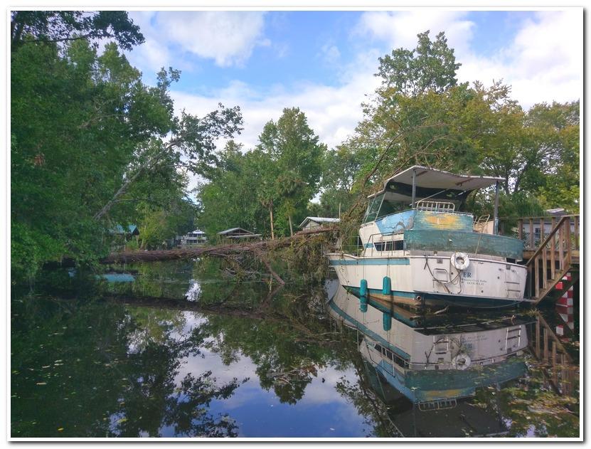 Tree vs boat