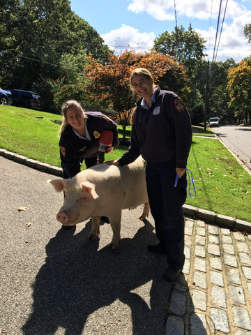 denise and cherie with pig.jpg