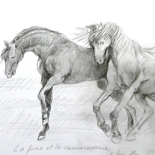 Série chevaux  20 x 20 cm