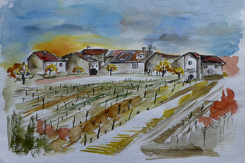 Vignes Suisses  20 x 30 cm