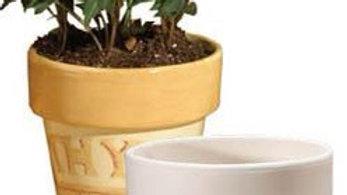 Small plant pot & saucer
