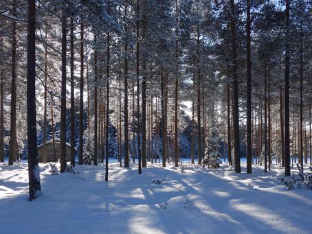 En hyllning till skogen