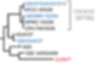 VpMT1 dendrogram fragment.png